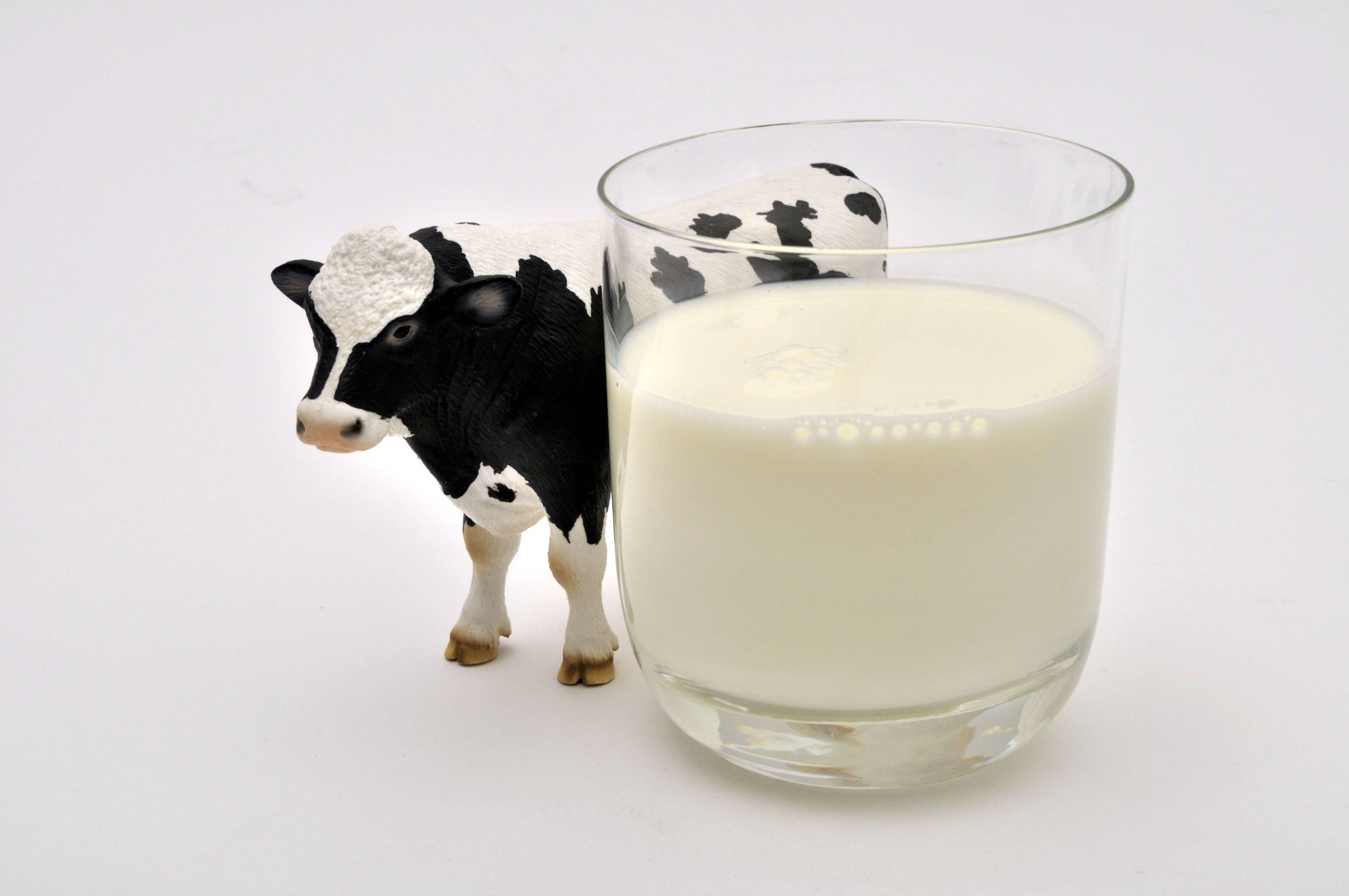 Devriez-vous boire du lait?