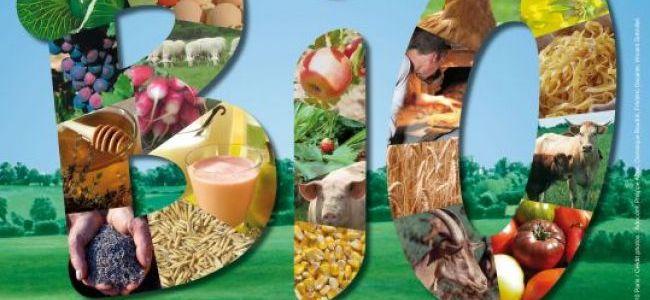 Nutrition : quelques vérités bonnes à savoir sur le Bio