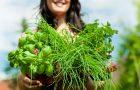 Les 10 meilleures herbes pour votre santé (Partie 2)